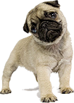 transparent pug introduction to pug packetizer forums 5417